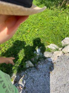 Grashüpfer entdeckt