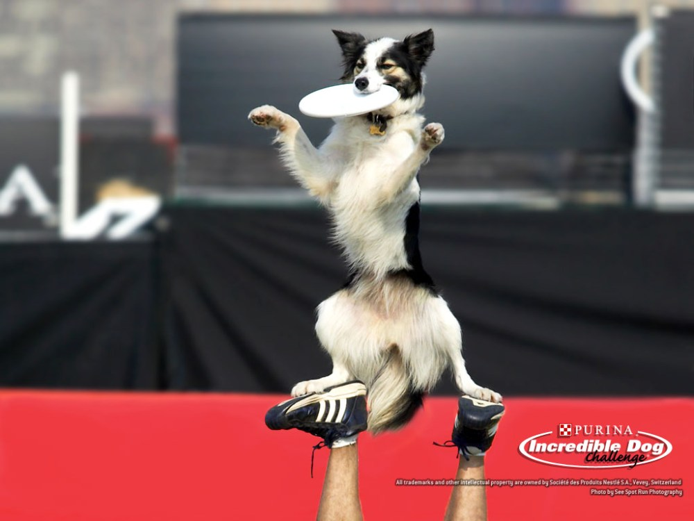 Fly boys! 4 Action Dog Wallpapers by Purina! (1/4)