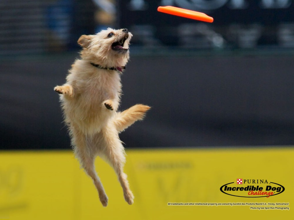 Fly boys! 4 Action Dog Wallpapers by Purina! (2/4)