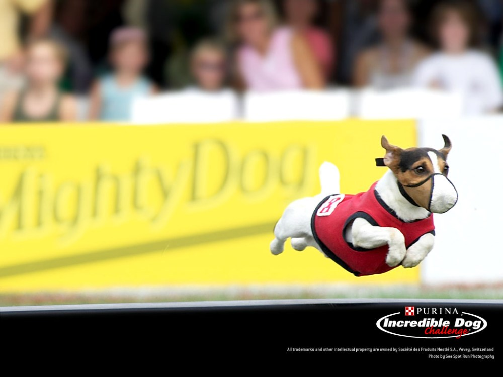 Fly boys! 4 Action Dog Wallpapers by Purina! (3/4)