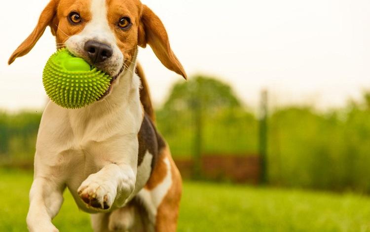 NorteHispana incluye a las mascotas en su seguro de Decesos familiar