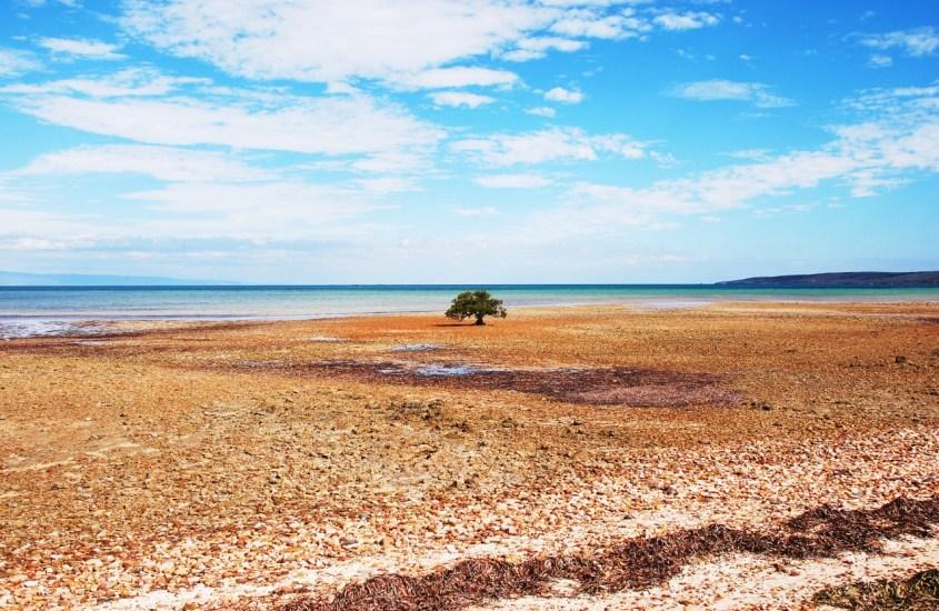 South Australia pikakelauksella
