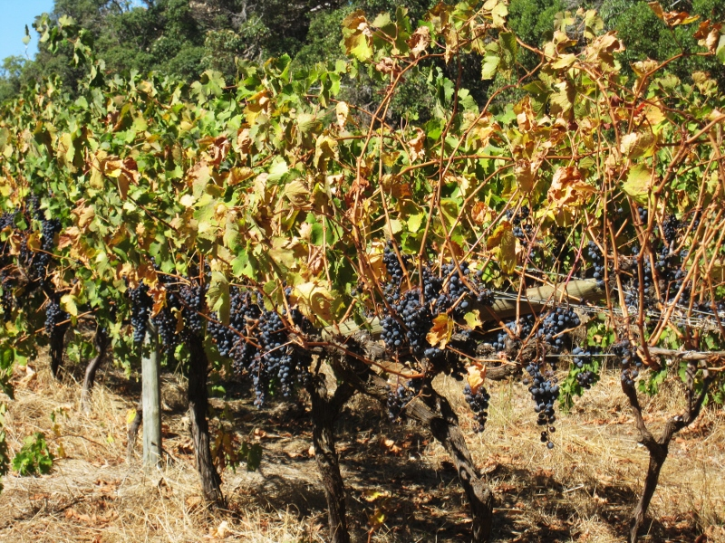 margaret riverin viinitiloilla