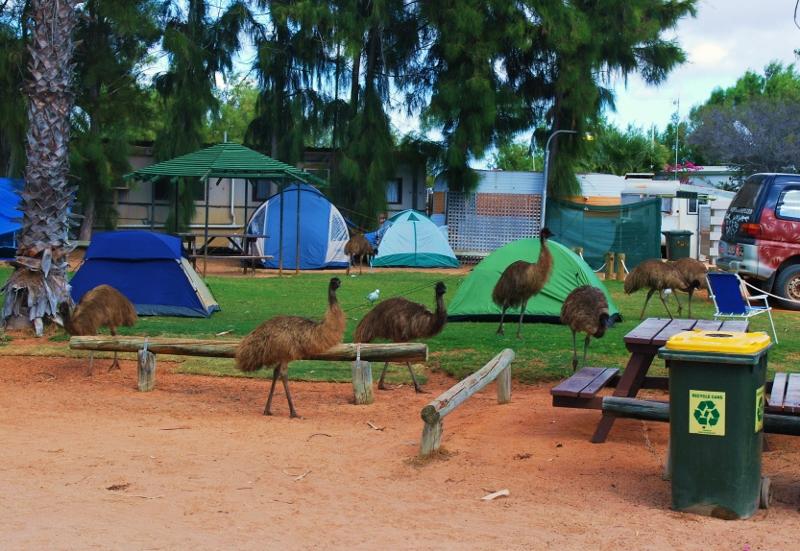 Emuja leirintäalueella