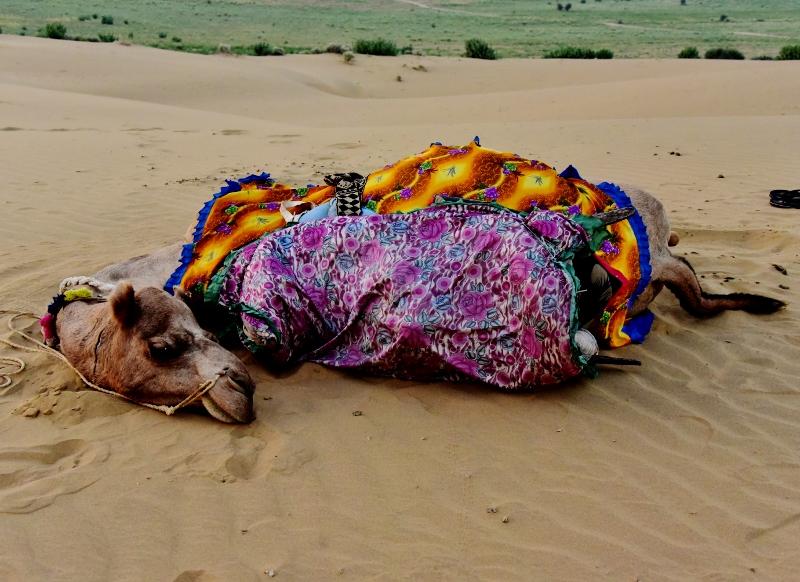Jaisalmer kamelisafari