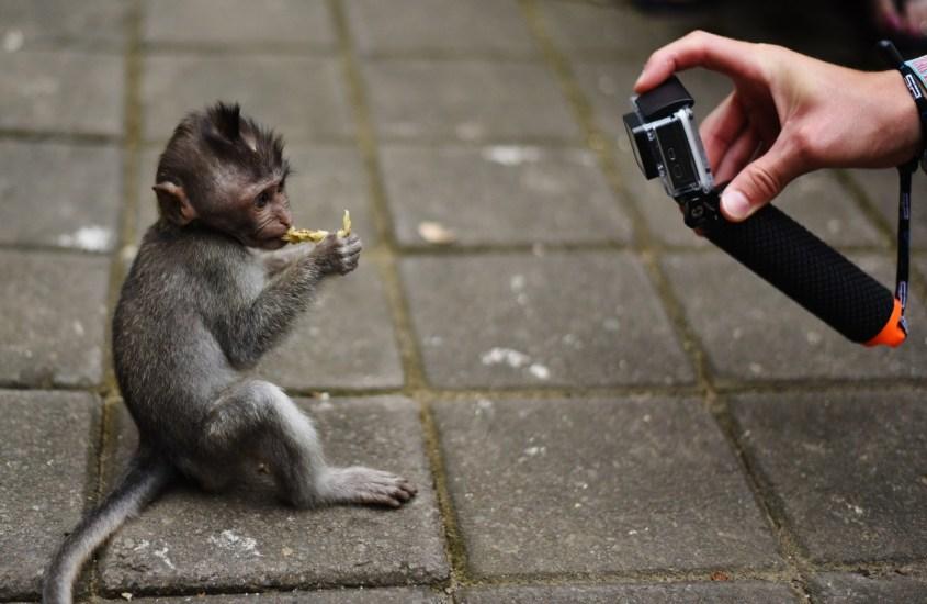 Ubudin apinametsässä