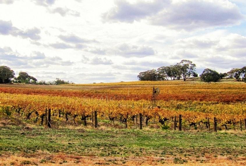 Clare Valleyn viinitiloilla