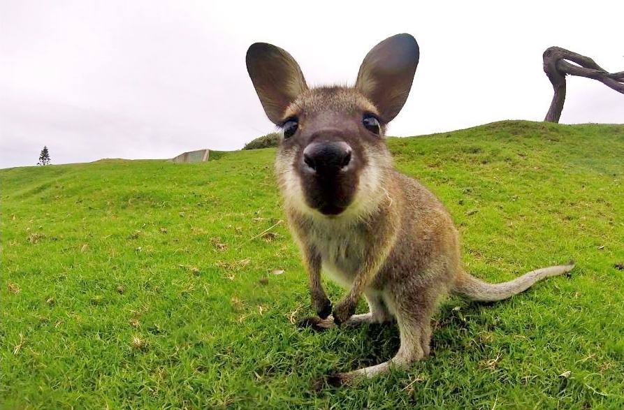 Australia Eläimet