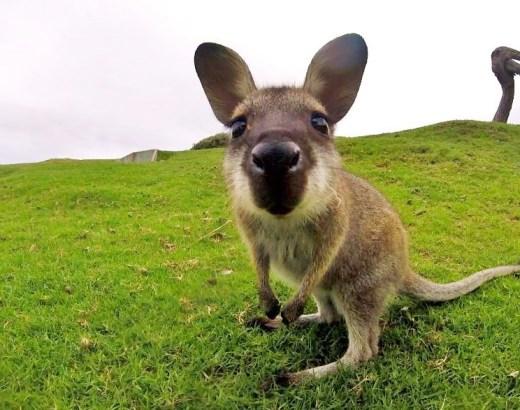 Missä nähdä Australian eläimiä luonnossa