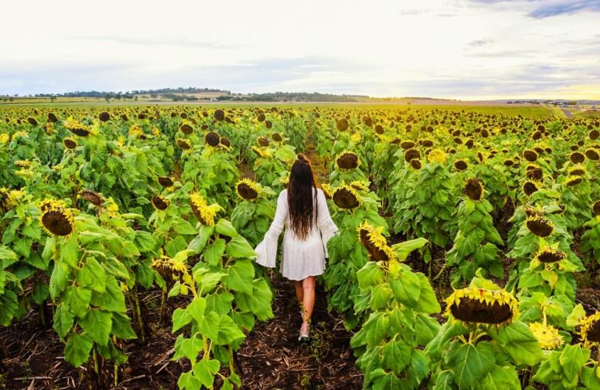 Auringonkukkapeltoja ja vesiputouksia Brisbanen maaseudulla
