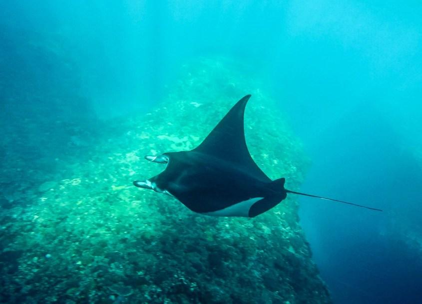 Nusa Penida sukellus