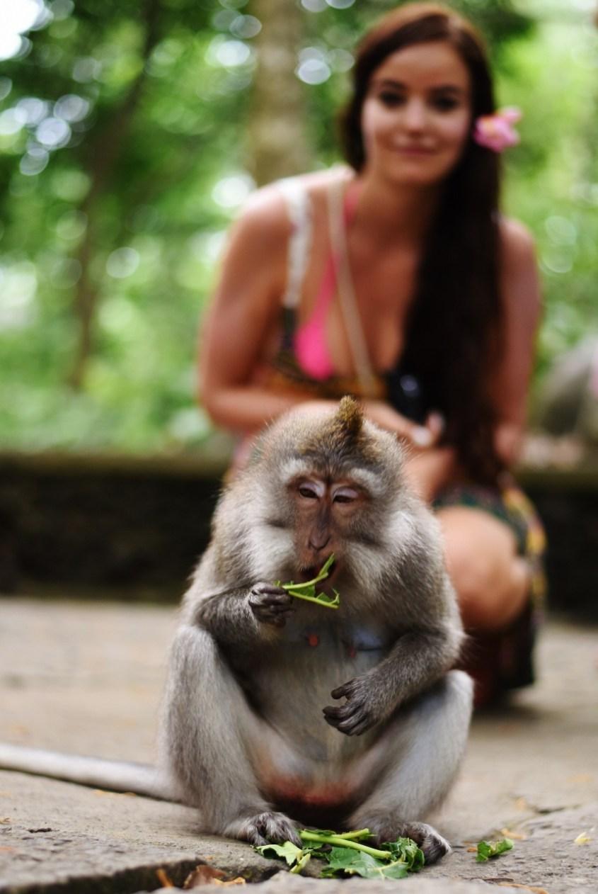 Ubud nähtävyydet | Apinametsä