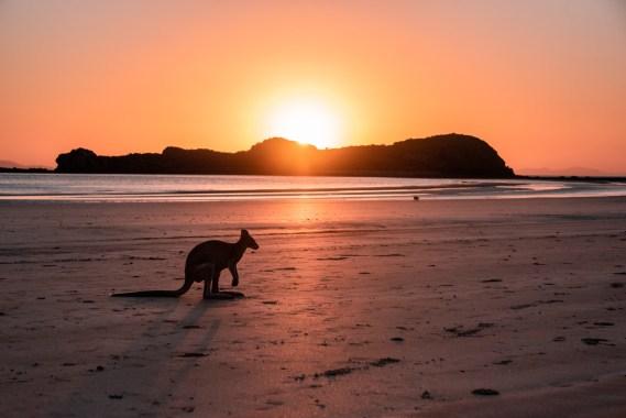 Elämä Australiassa