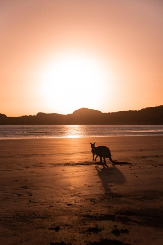 Cape Hillsborough | Australia