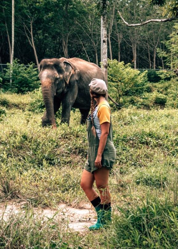 Vapaaehtoistyö Thaimaassa | Norsujen suojelu