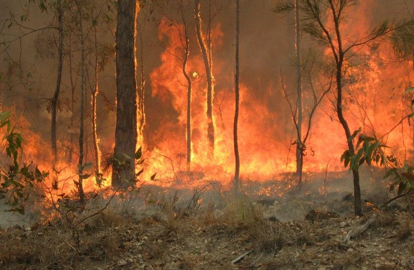 Australia on tulessa – Mitä, miksi,  miten voimme auttaa?