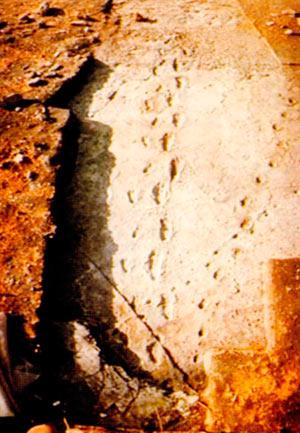 Отпечатоци на 3,6 милиони години стариот човек, сочувани во слојот на оладен вулкански пепел