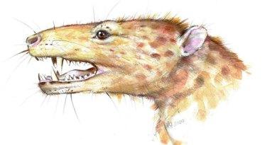 Szczątki najstarszego prassaka z Grenlandii