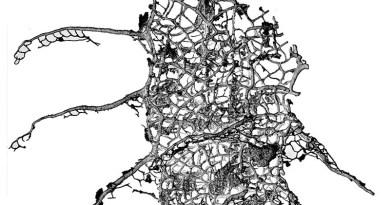 Nowy gatunek retiolita z Polski
