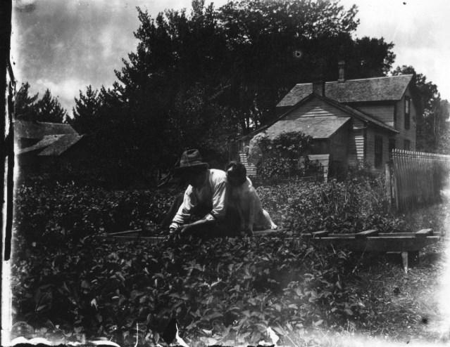 photo of Gardening
