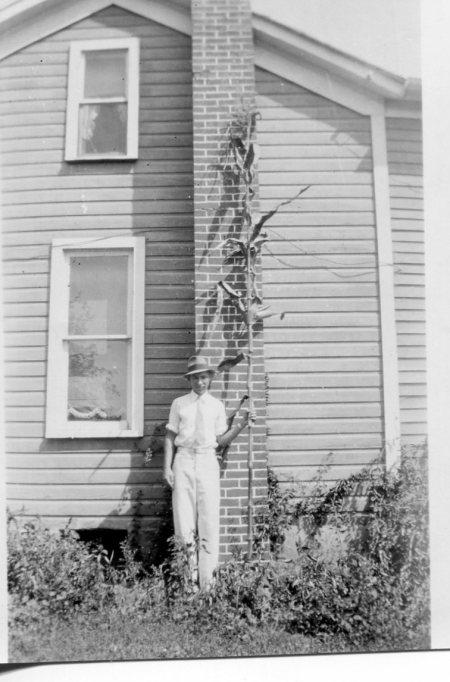 photo of Tallest Corn