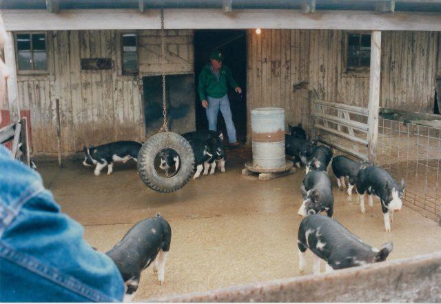 Photo of Leroy Joseph Faint and hogs