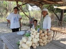 buying turnips
