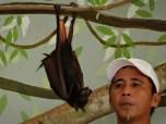 Ocean Adventures trained fruit bat