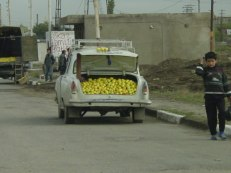 Apple Lada