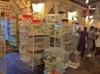 Al-Hamam Pet Market
