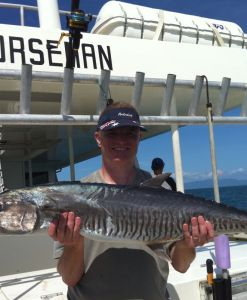 norseman spanish mackerel