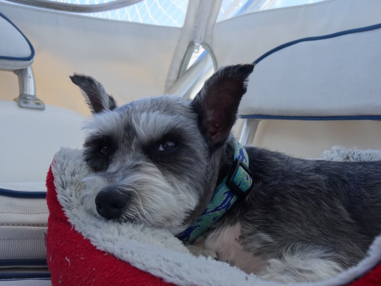 Cruising is hard work and a Super Cruising Dog needs his rest!