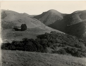 Strawberry Canyon, Berkeley, California, 1890s, probably taken by Andrew C. Lawson