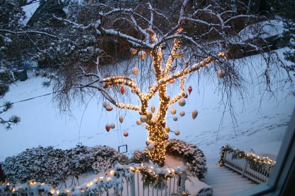 Seattle, December 18, 2008
