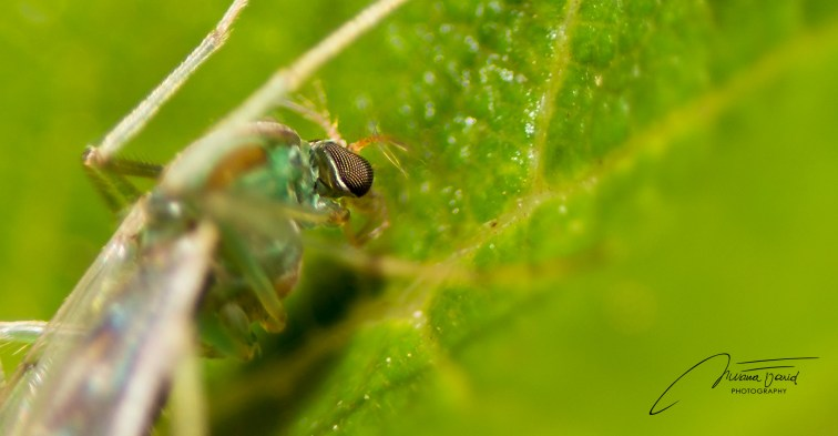 _NKL1419_Macroinsect4_1920_997