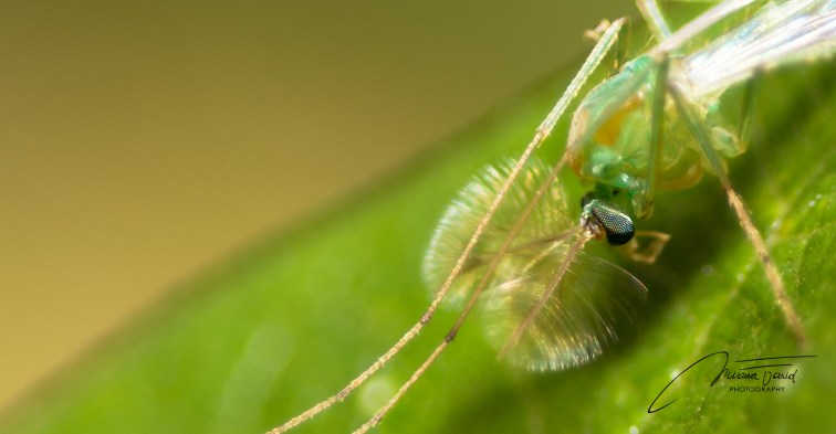 _NKL1423_Macroinsect2_1920_997
