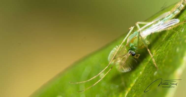 _NKL1423_Macroinsect_1920_997