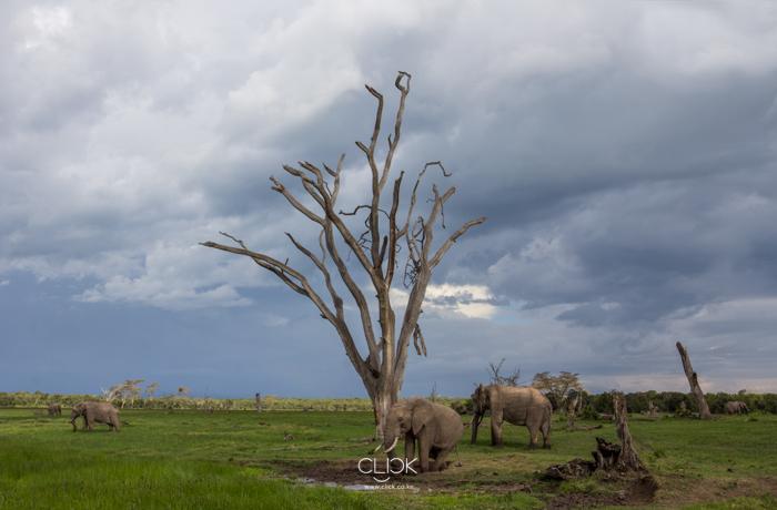 World_Elephant_Day-12