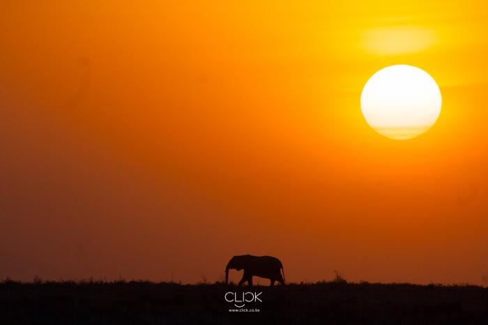 World_Elephant_Day-2