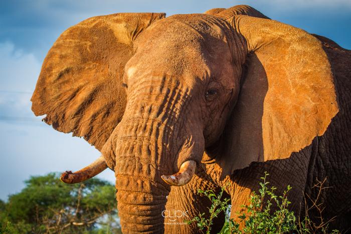 World_Elephant_Day-4