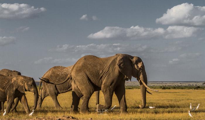 #OnetouchLive Amboseli – Part 1