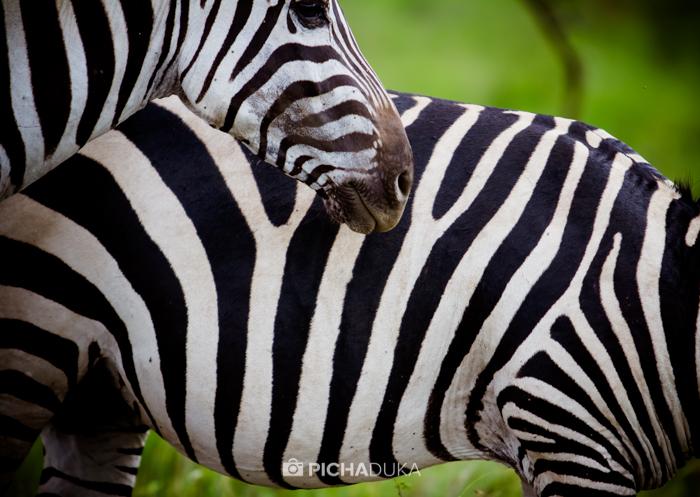 Nairobi National Park on Madaraka Day