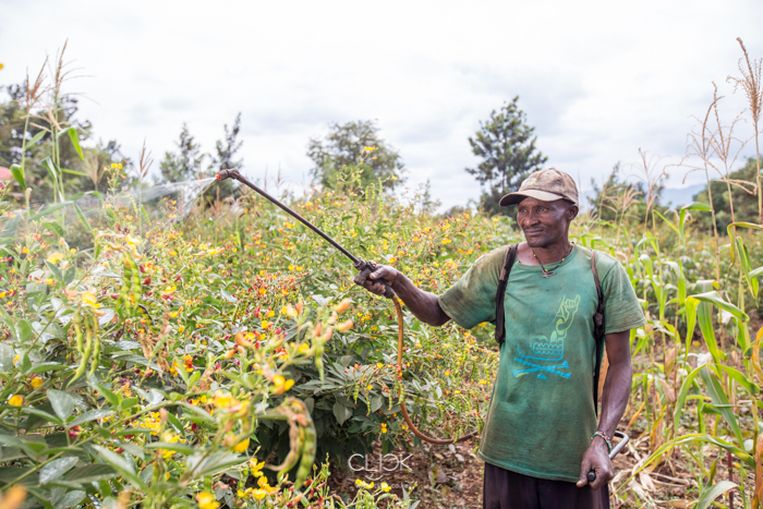 Stephen Ndivo, 45, sprays insecticide on his cow peas farm in Tharaka North Sub County, Kenya, on 19th July 2016. Stephen has been in farming since 1983, when he was just a pupil. Today, through the proceeds of his farming, he is able to keep his 5 children in school. Stephen is one of the farmers who deliver their harvest to Mukothima Grain Aggregation Centre. The centre, set up with the help of Agra, has helped farmers in the area fetch a better price for their harvest by selling in bulk.