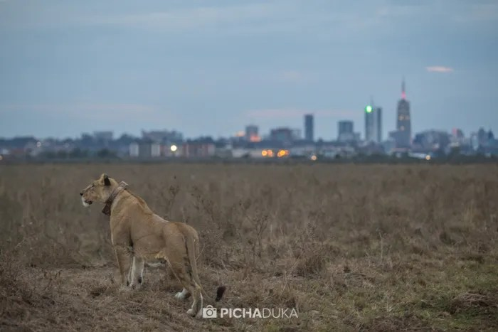 Nairobi-National-Park_Mwangi-Kirubi-1