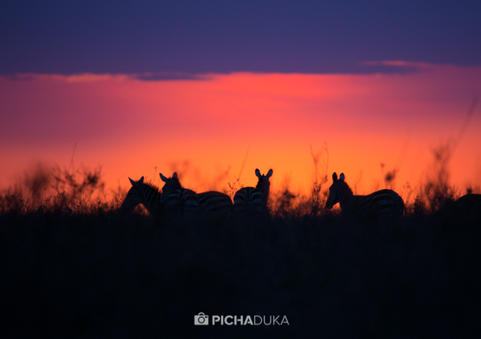 Zebras are silhouetted at sunrise in Nairobi National Park on 11th August 2017.