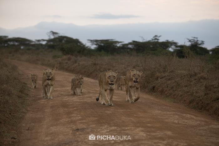 Nairobi-National-Park_Mwangi-Kirubi-5