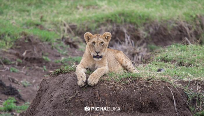 Nairobi_National_Park-104