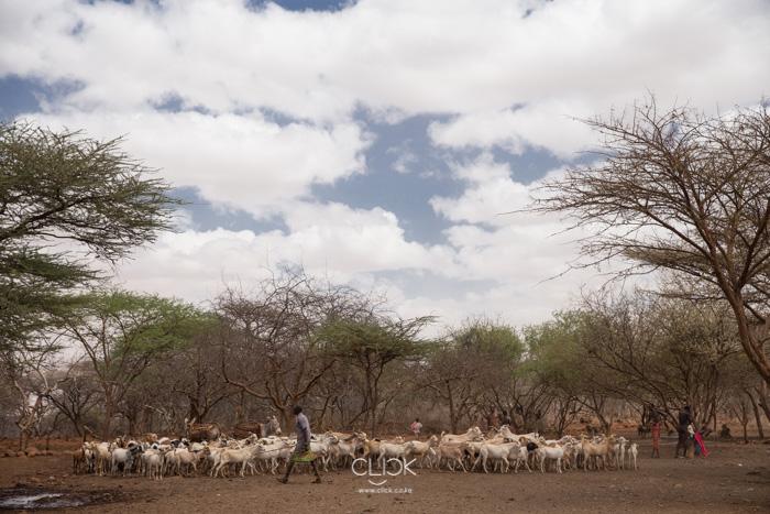 Livestock at a well in Marsabit. 20th September 2017.