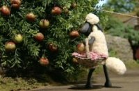 Shaun the Sheep goes scrumping.