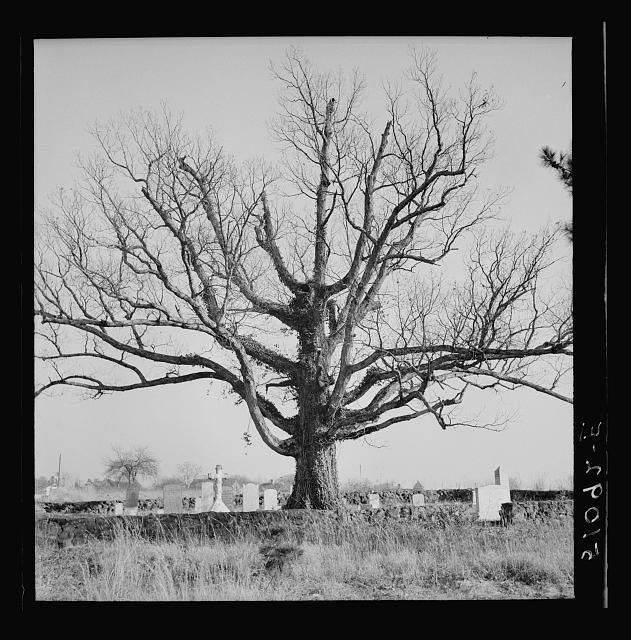 Old graveyard. North Carolina. Wolcott, Marion Post, 1910-1990, photographer. 1938 Dec.